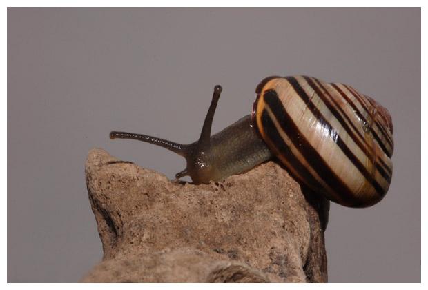 foto's, diverse soorten, verschillende Slakken (Gastropoda)
