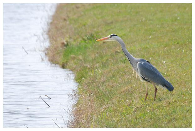 foto's, Natuurgebied Zandpolder, Callantsoog en Groote Keeten, Landschap Noord Holland