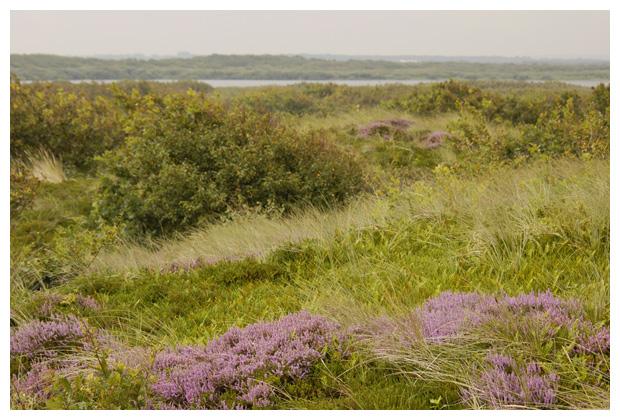 foto´s, Zwanenwater, Callantsoog, Noord-Holland, Nederland