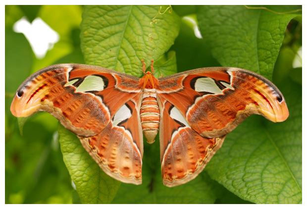 foto's Tropisch vlinderparadijs Vlindorado, Waarland, vlinders