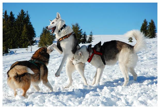 foto's, diverse soorten, verschillende hond, honden, hondenfoto´s