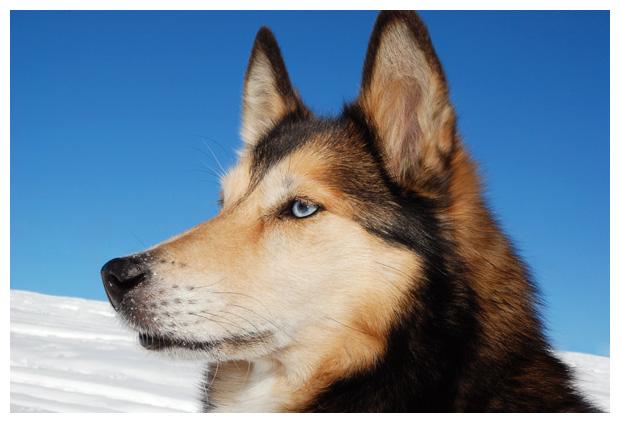 foto's, diverse, rassen, honden