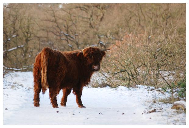 foto's, winter, winters, winterlandschap, winterlandschappen, winterslandschap