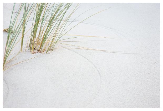 foto´s, Helm (ammophila arenaria), gras