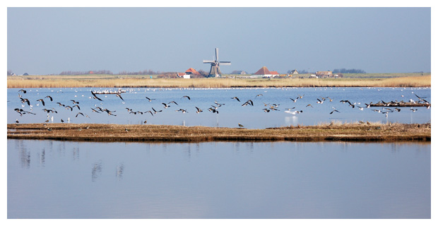 foto's, natuurgebied Harger- en Pettemerpolder, Noord-Holland