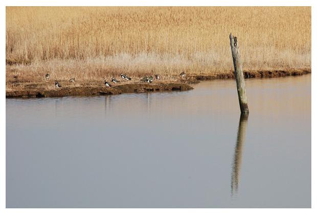 foto's, natuurgebied Harger- en Pettemerpolder