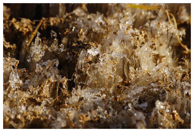 foto's, Naaldijs, Naald ijs, Needle ice, naaldvormige ijskristallen, ijs uit de grond