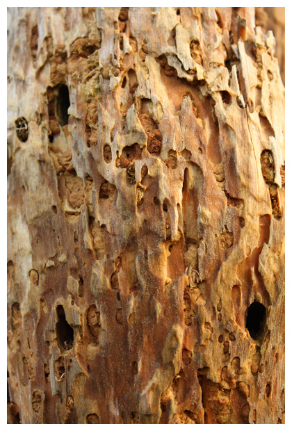 foto's, verschillende soorten hout