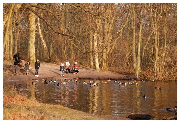 foto's, Natuurgebied Donkere Duinen, bos, Noord-Holland, Den Helder