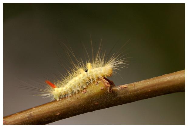 foto's, diverse soorten, verschillende insect, insecten
