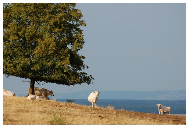 regio Bourgogne-Franche-Comté, bourgondië departement  nièvre in frankrijk /  boergondië, bourgogne, bourgondie, nievre, france, steden, stad, landshap