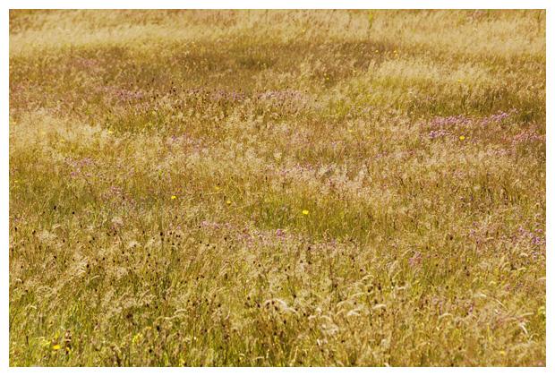 diverse soorten gras, grassen, grasje, grasjes