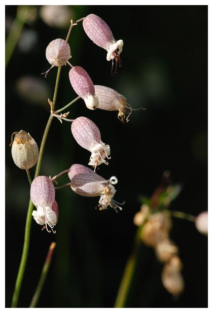 bloemen en planten in beeld