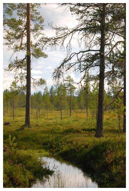 foto's, Jämtlands län, Zweden