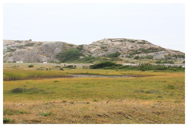 foto's, Tjurpannans Naturreservat, Västra götalands län, Västergötland, Zweden