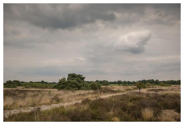 foto's, Nationaal Park De Groote Peel, Limburg, Noord-Brabant, Nederland