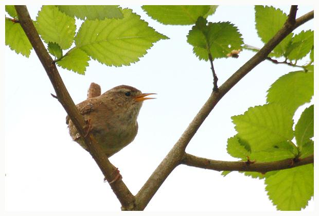 foto´s, diverse soorten, verschillende vogelsoorten