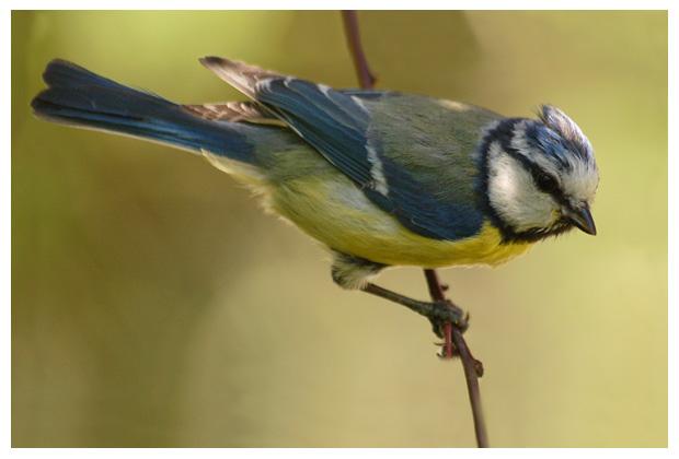 vogel, vogels, vogeltje, vogeltjes, vogelfoto´s