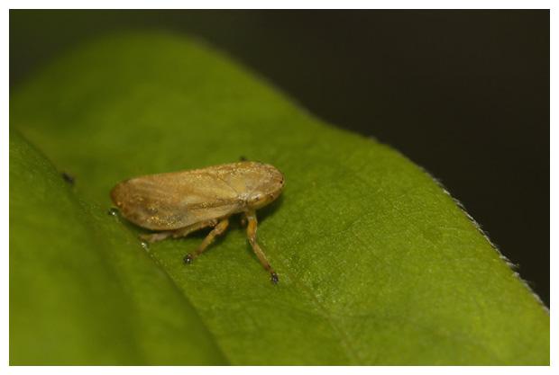 foto's, diverse soorten verschillende cicade