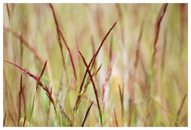 gras, grassen, grasje, riet