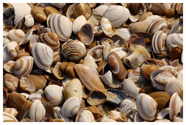 foto's, schelp, schelpen, schelpje, schelpjes, strand, noordzee