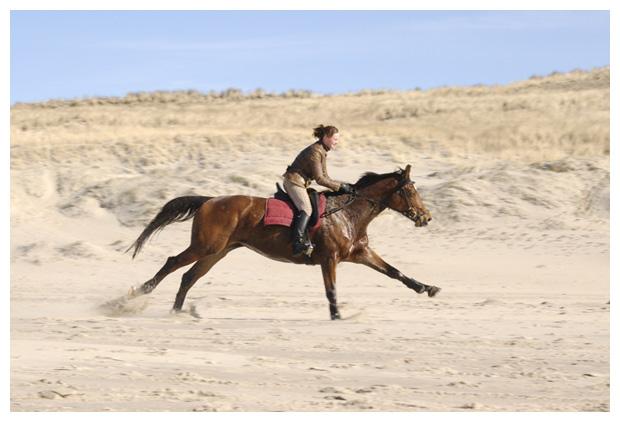 foto's, paard, paardenfoto´s, strand