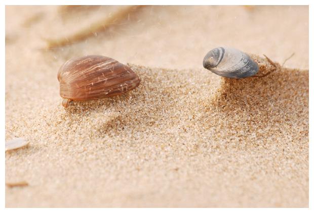 foto's, schelp, schelpen, schelpje, schelpjes, strand