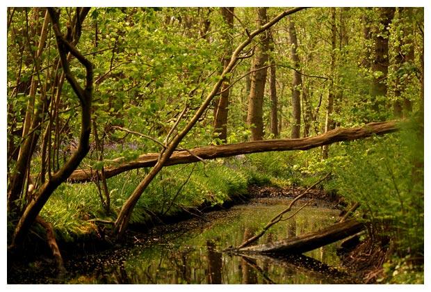 wildrijk in sint maartensvlotbrug, wildrijkfoto´s, bos, bosfoto´s, landschap, landschappen, landschapsfotos, landschapsfoto´s, landschapsfoto's . / -  plaatjes uit te