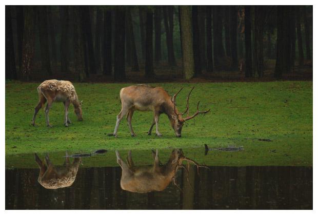 foto's, provincie Noord Brabant