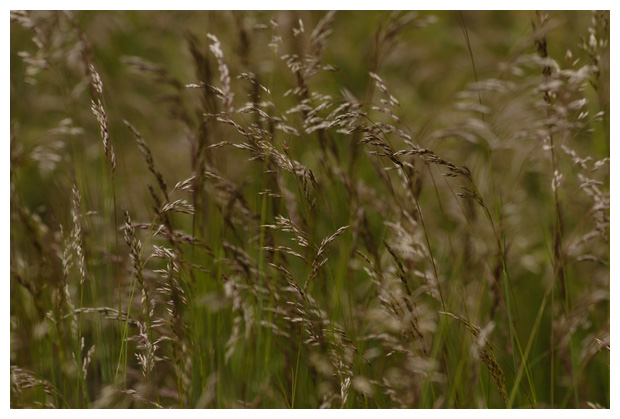 diverse soorten gras, grassen, grasje, grasjes, vasteplant