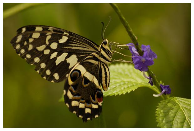 foto's, Tropische Vlindertuinen