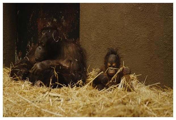foto's, Burgers zoo, Arnhem, dierentuin