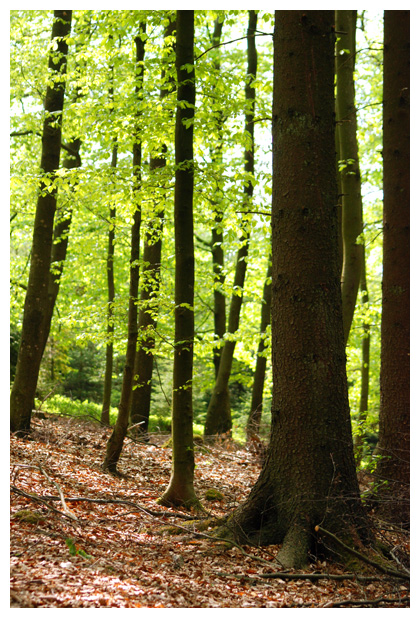 foto´s, Montenau, Belgie, landschapsfoto´s, landschapsfoto's