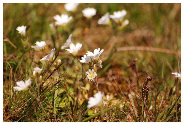 Geliefde bloemen, bloem, bloemenplaatje, bloemenplaatjes, bloemenfoto's &VH39