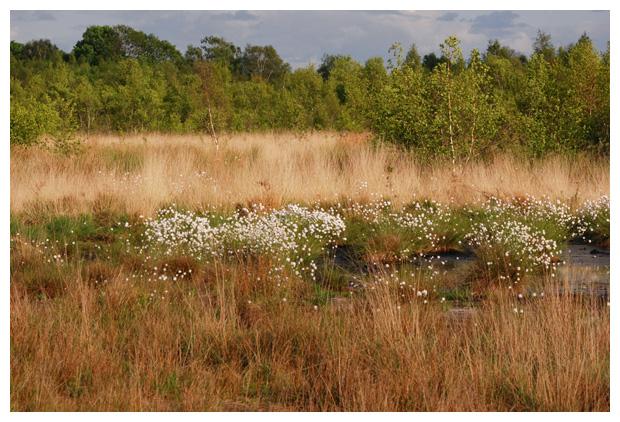 foto's, natuurgebied, Haaksbergerveen, Overijssel