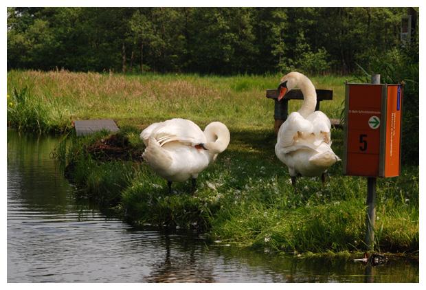 foto's, Nationaal Park Weerribben-Wieden, Wieden, Weerribben, Overijssel