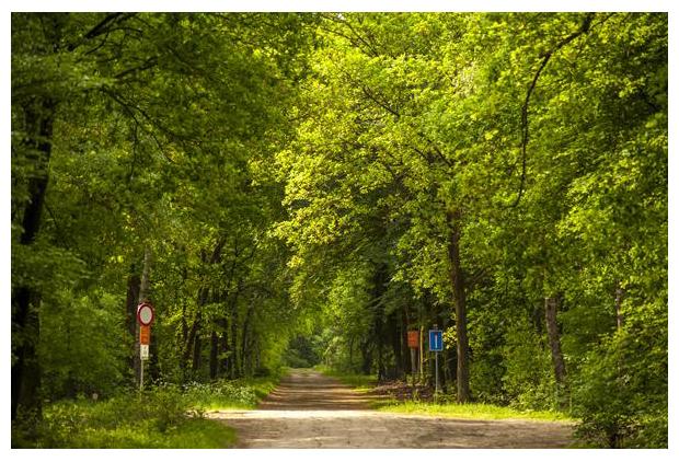 foto's, Kootwijkse Veld, Veluwe, Gelderland, Nederland