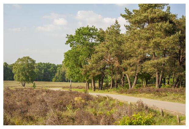 foto's, natuurgebied Elspeetsche Heide, Gelderland, Nederland