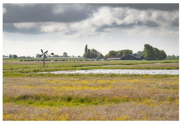 foto's, Natuurgebied Polder Berkmeer, Landschap Noord Holland