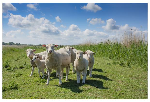 foto's, Natuurgebied Kolk van Dussen, Lambertschaag, Aartswoud, Landschap Noord Holland