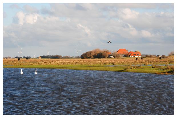 foto's, Natuurgebied Nollenland van Abbestede, Callantsoog, Groote Keeten, Noord-Holland, Nederland