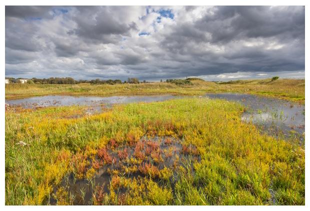 foto's, Natuurgebied De Nollen Zuid, Landschap Noord-Holland, Den Helder