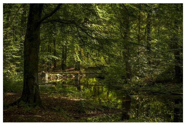 foto's, Voorsterbos, Waterloopbos, Marknesse, Flevoland