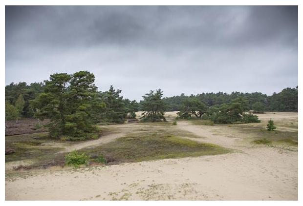 foto's, natuurgebied Planken Wambuis, Gelderland, Nederland