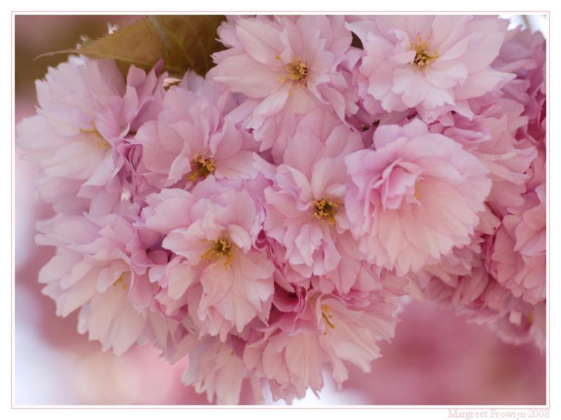 bloemenwallpaper, bloemwallpaper, bloemwallpapers, gratis achtergrond