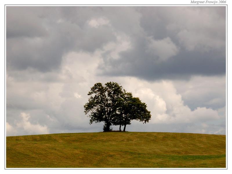 boom alleen op een heuvel, free wallpaper, wallpapers, gratis achtergrond, achtergronden