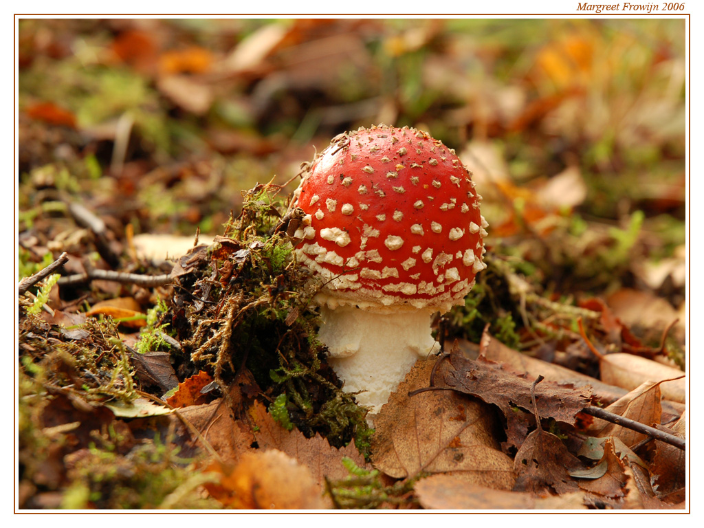 Citaten Herfst Free : Gratis wallpaper ffree wallpapers