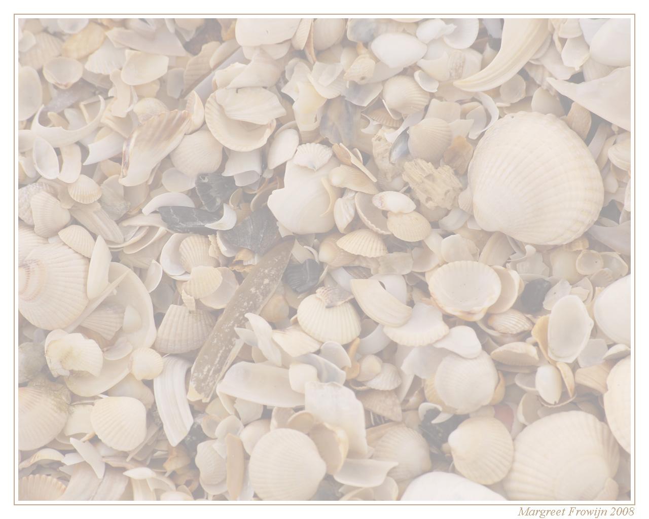 wallpaper, wallpapers, achtergrond, achtergronden, schelp, schelpen